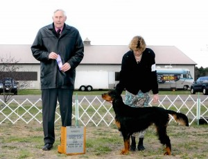 Gordon Setter Puppies For Sale in Wisconsin