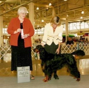 Martini Gordons Champion in Des Moines Kennel Club Show