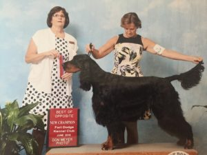 Beckett Gordon Setter Champion