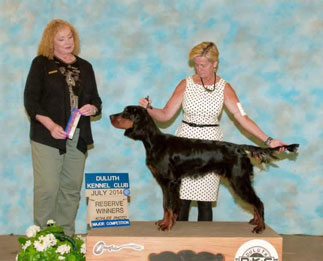 Gordon Setter Puppies For Sale Wisconsin